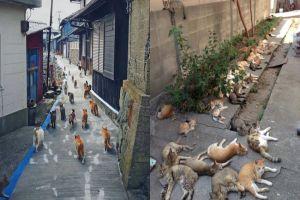 Aoshima, pulau di Jepang yang dikuasai oleh ratusan kucing liar