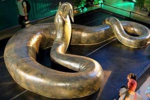 Inilah 5 keunikan Titanoboa, ular terbesar di dunia