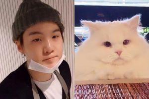 10 Kucing ini disebut-sebut mirip dengan public figure Korea Selatan