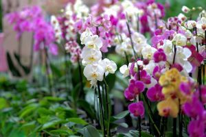3 Cara merawat tanaman anggrek di rumah, mudah dan sederhana