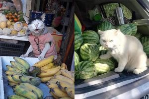 8 Potret kucing menjaga barang dagangan ini bikin ketawa bingung