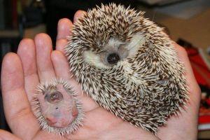 7 Potret binatang saat baru lahir ini lucu dan menggemaskan banget