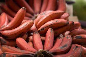 Inilah 8 jenis pisang paling terkenal di dunia, ada pisang raja juga