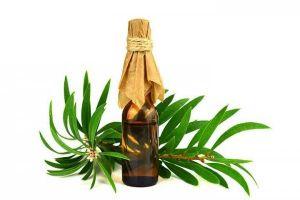 8 Manfaat minyak kayu putih yang patut kamu ketahui