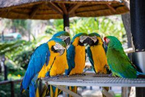 Berkata kasar, burung beo di kebun binatang dipindahkan dari displai
