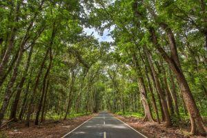 Menyusuri Djawatan, hutan eksotis di ujung timur Pulau Jawa