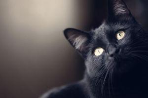 7 Mitos kucing hitam dari berbagai negara yang patut kamu ketahui