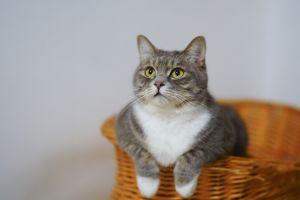 5 Penyebab bulu kucing rontok yang harus kamu ketahui