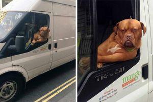 15 Potret kelucuan anjing saat diajak naik mobil ini bikin ngakak