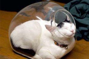 7 Potret ini membuktikan bahwa kucing adalah hewan yang fleksibel