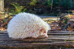 6 Binatang albino ini bak berasal dari planet lain, unik banget