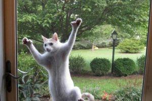 18 Ekspresi hewan saat tak diizinkan masuk rumah ini bikin gemas