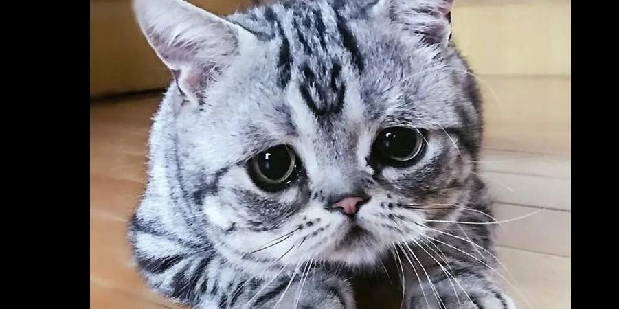 10 Potret Luhu Kucing Berwajah Sedih Yang Jadi Selebgram
