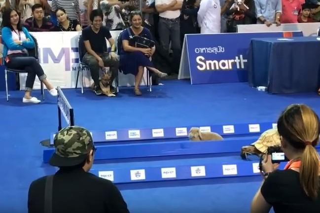 Penasaran Siapa Pemenang Lomba Lari Antara Kelinci Dengan Kura Ku
