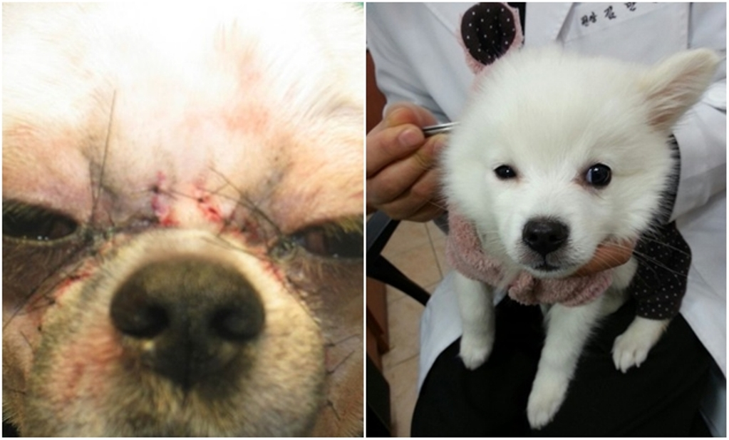 nggak cuma dilakukan pada manusia oplas pada anjing juga