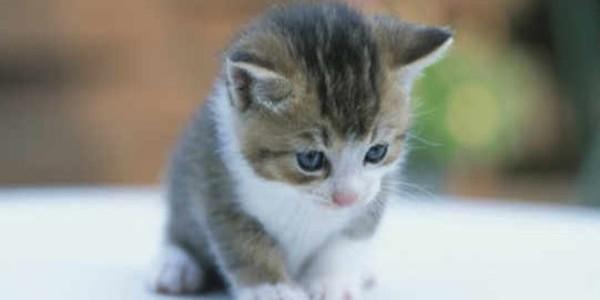 Anak Kucing Baru Lahir Mati Jika Dipegang Manusia Ini Penjelasan