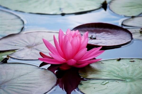 8 Tanaman yang membawa keberuntungan dan kesialan, kok bisa sih?