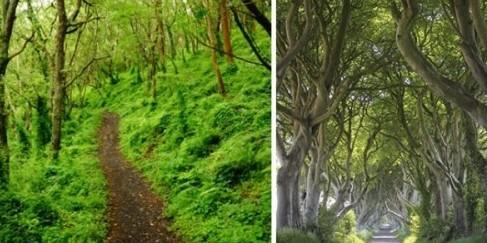 Pilih 1 dari 6 jalan di hutan ini, kamu baka tahu kepribadianmu