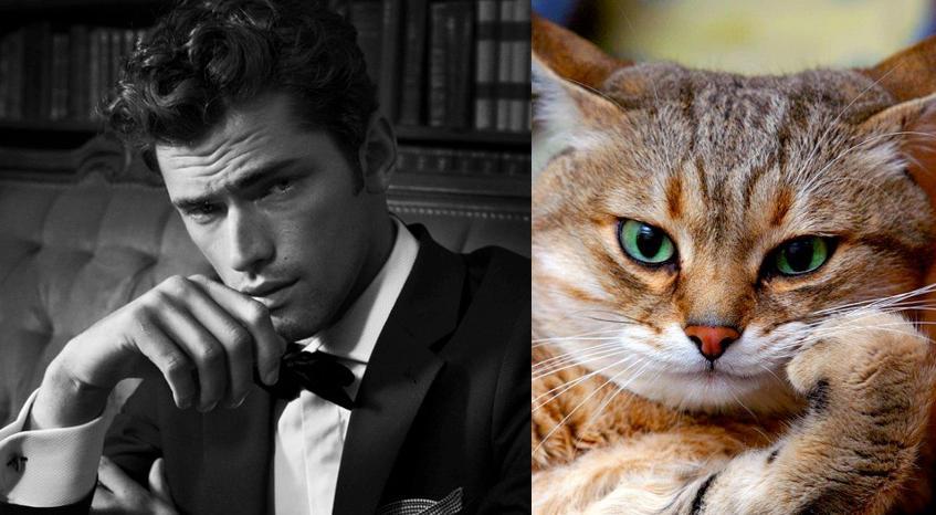 15 Pose Kocak Kucing Pintar Meniru Model Cowok Dijamin