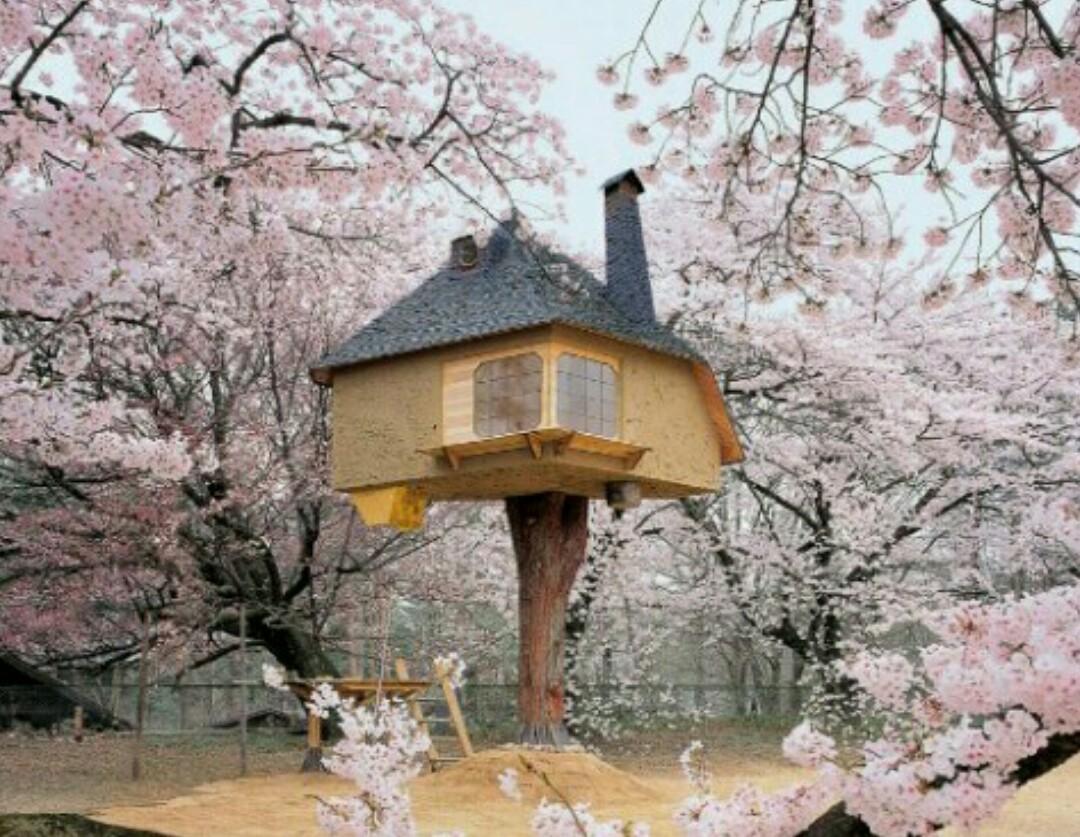 13 Rumah Pohon Yang Paling Menakjubkan Luar Biasa Banget