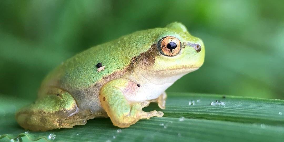 Hasil gambar untuk katak