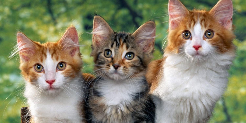 Jangan ngaku pencinta kucing kalau belum tahu 5 fakta ...