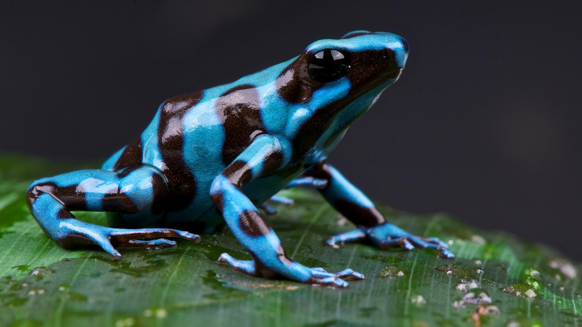 Terisolasi, ini dia 5 hewan paling mematikan di Hutan Amazon