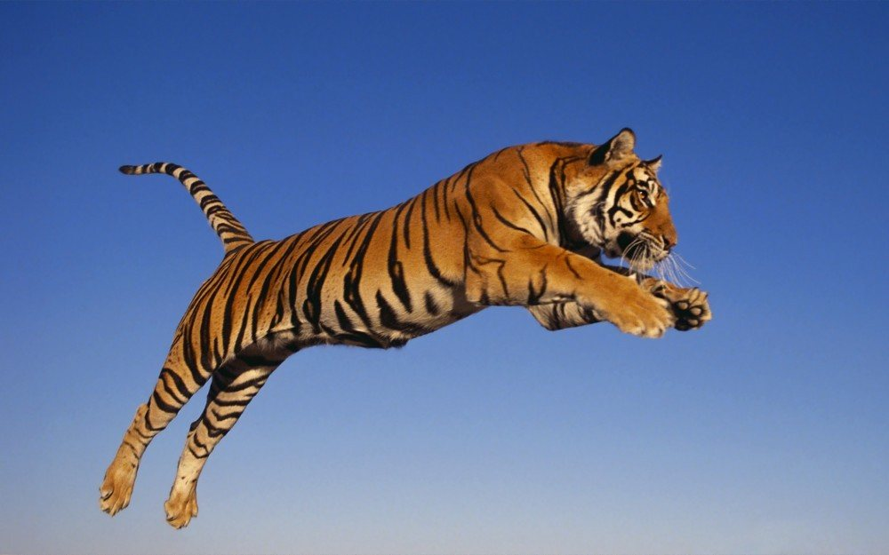 Mengenal Harimau Bali, fauna karismatik yang telah punah