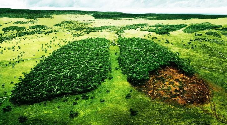 10 Fakta tentang hutan hujan Amazon, eco-region terbesar di Bumi