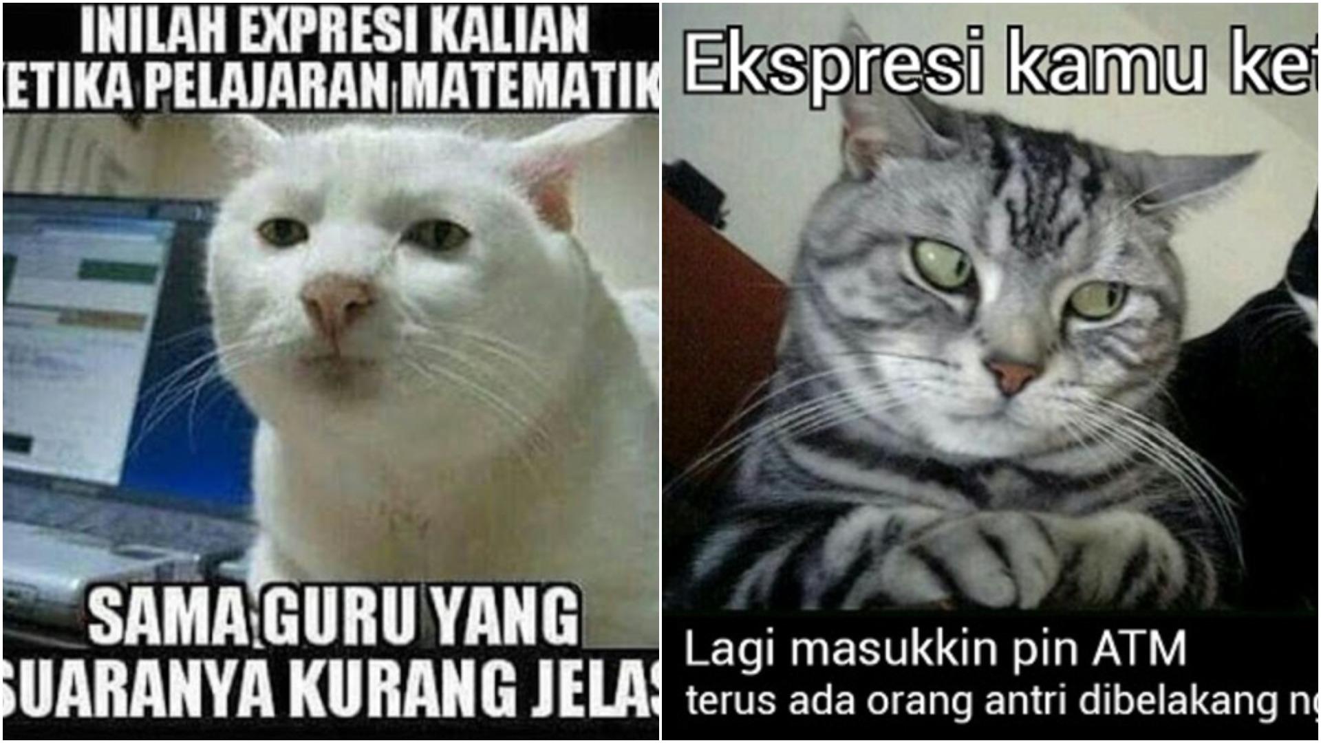 15 Meme Kelakuan Kucing Ini Dijamin Bikin Ketawa Kocak Banget