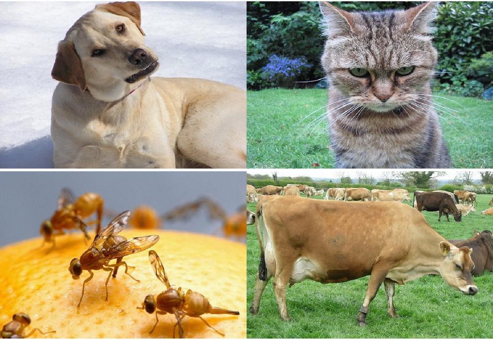8 Hewan ini dapat memprediksi bencana alam sebelum terjadi