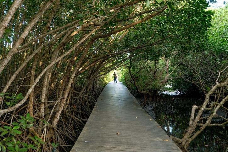 7 Wisata mangrove terindah di dunia, gak kalah cantik dari Indonesia