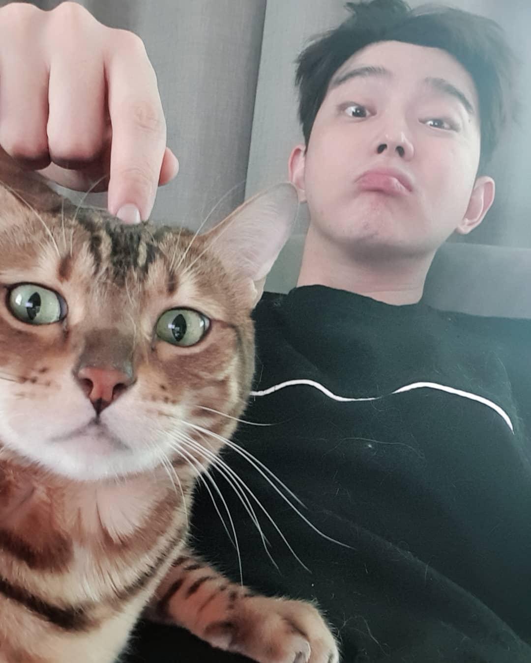 Nama Kucing Korea 81021 Nama Untuk Kucing Comel Lucu Dan Unik