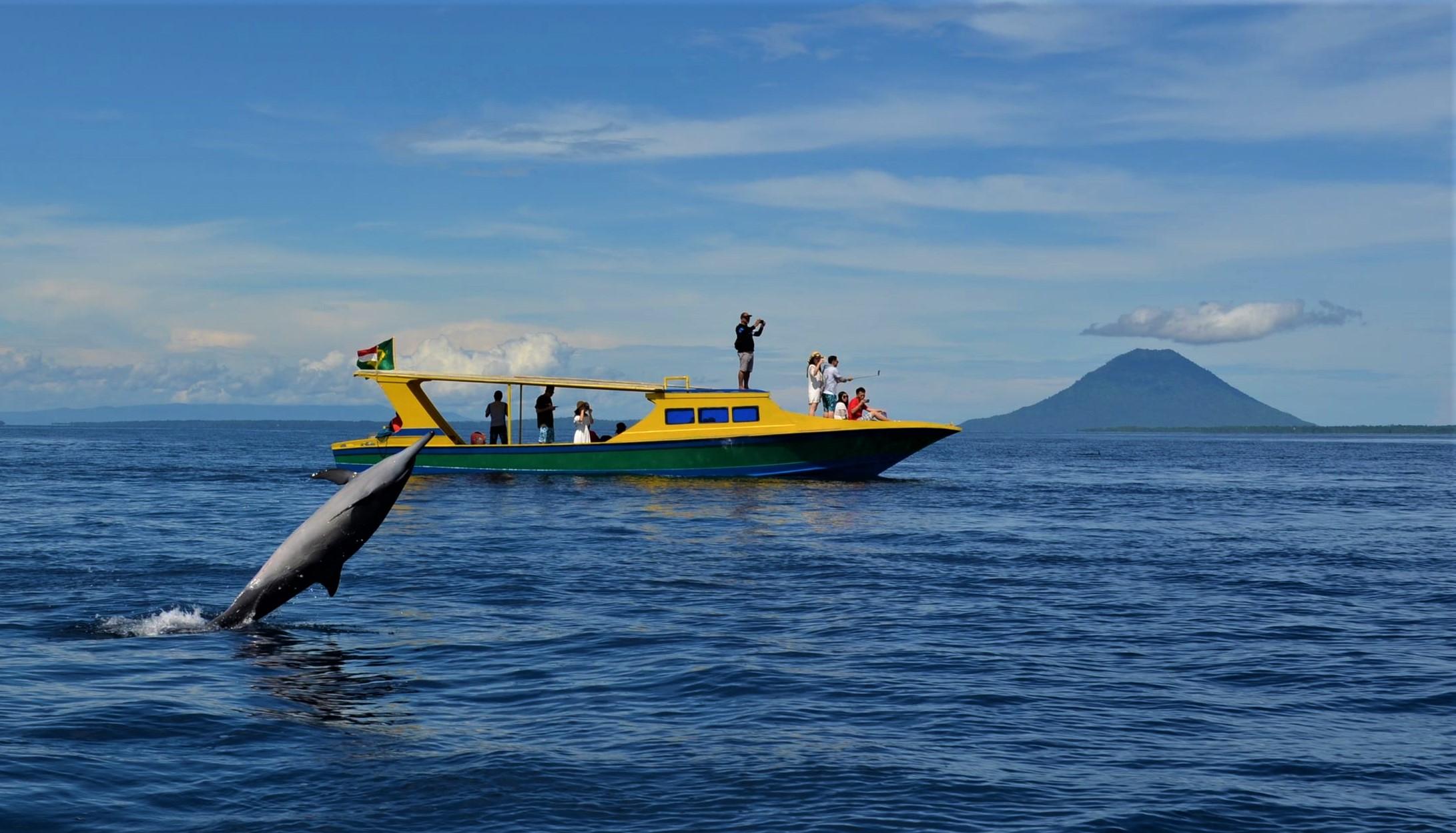 Ini dia 6 jenis raksasa laut yang selalu bermain di Teluk Manado