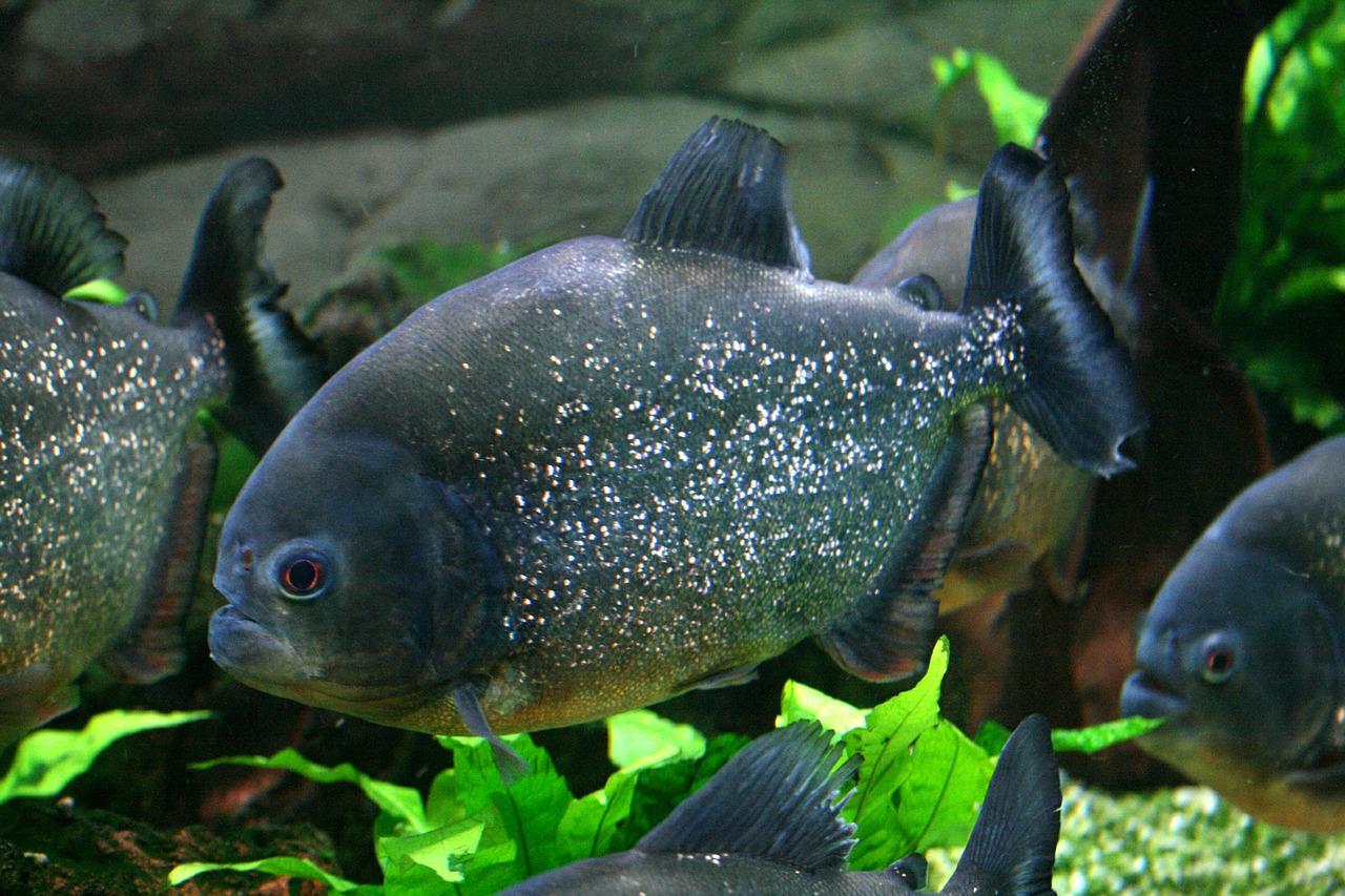5 Hewan Ini Termasuk Dalam Kategori Berbahaya Di Sungai Amazon