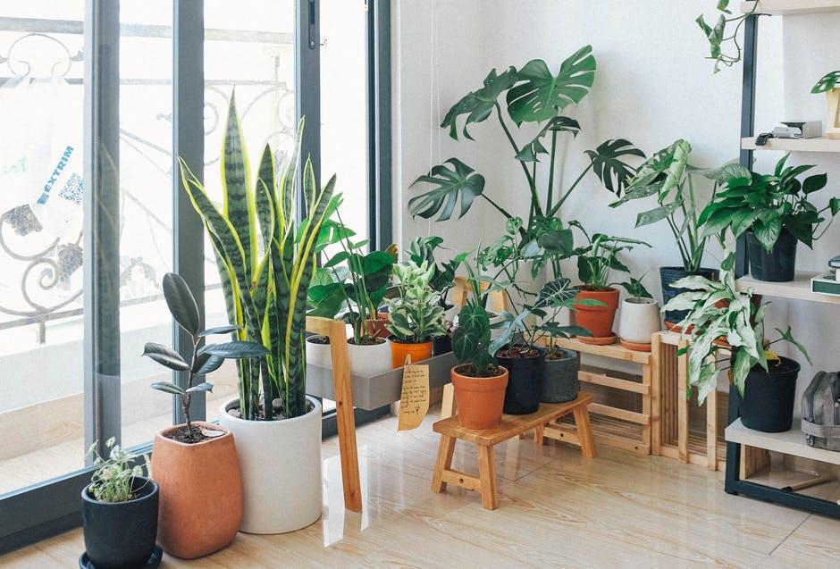 8 Cara memelihara tanaman hias dalam ruangan bagi pemula