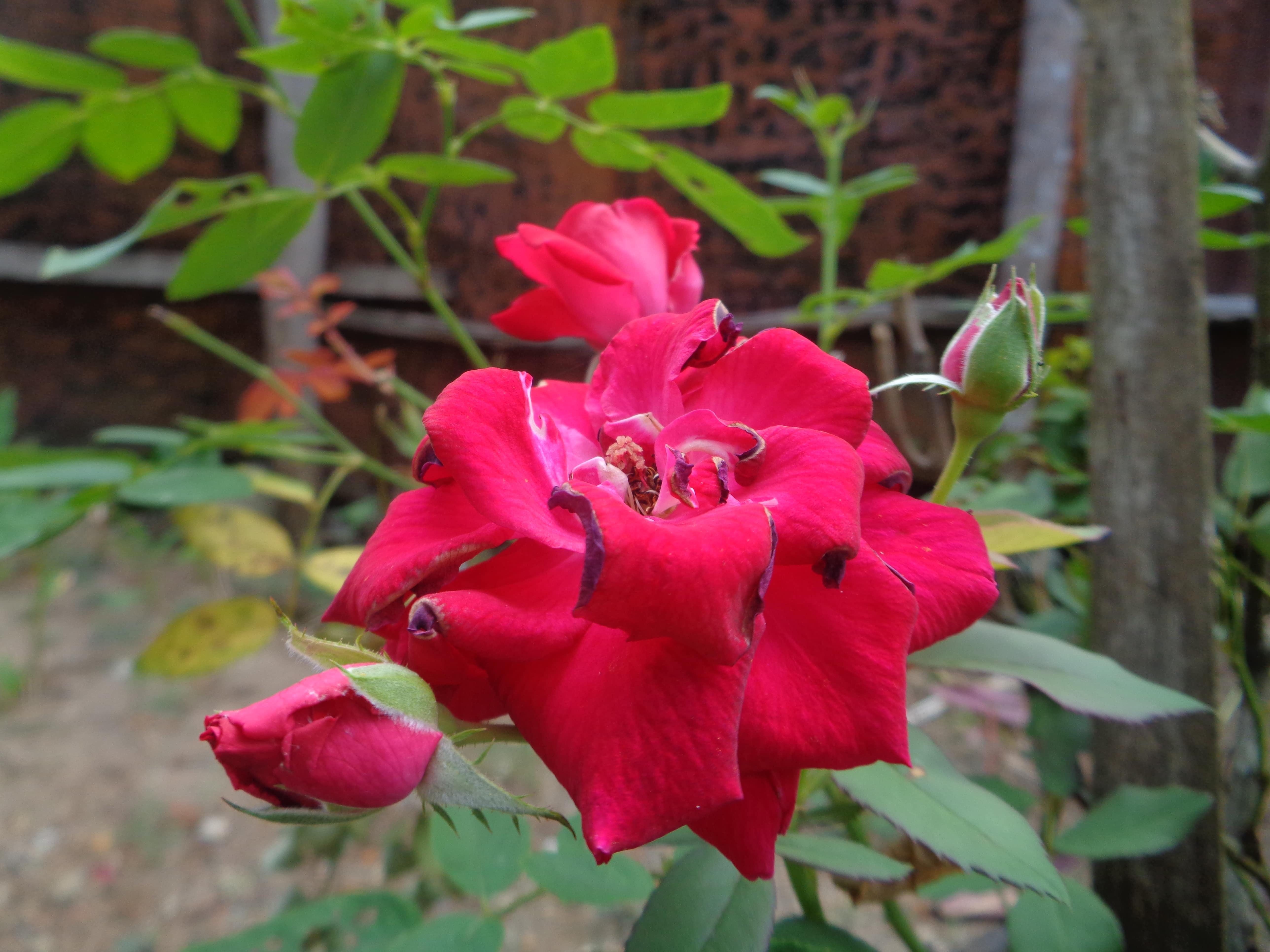 Yuk, percantik pekarangan rumahmu dengan 5 jenis tanaman ini