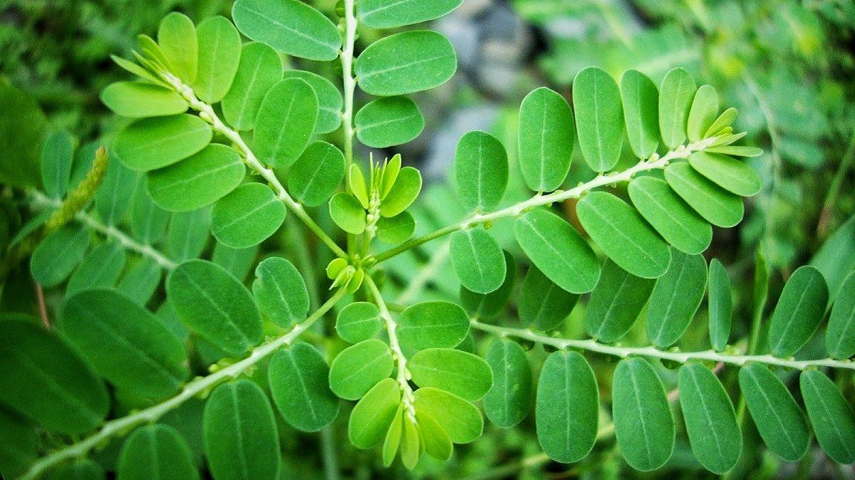 5 Manfaat tersembunyi daun kelor yang patut kamu ketahui