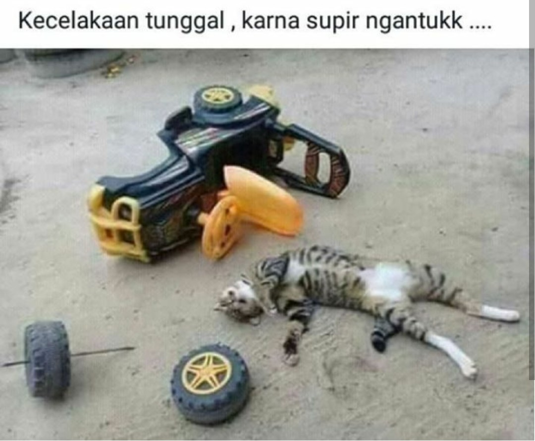 5 Meme Drama Kucing Di Media Sosial Ini Dijamin Absurd Abis
