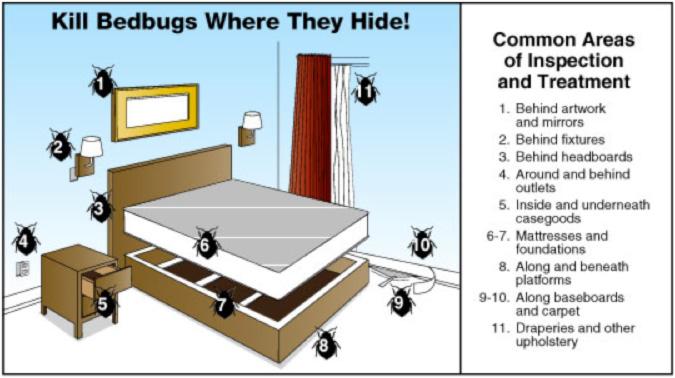 Mengenal Si Kecil Bed Bugs Ancaman Berbahaya Dari Kamar Tidurmu