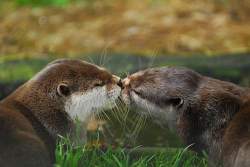 20 Pasang hewan 'berciuman' ini tunjukkan kasih sayang di alam liar