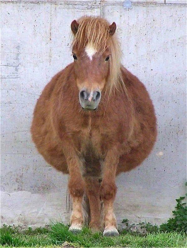 10 Hewan hamil ini bentuknya jadi menggemaskan