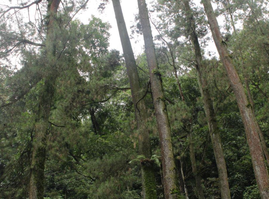 5 Alasan menanam patut jadi hobi, bisa selamatkan bumi lho