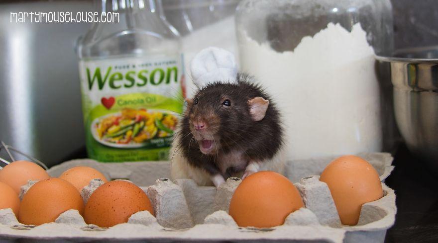 Nggak cuma di film Ratatouille, tikus jago memasak ternyata asli ada