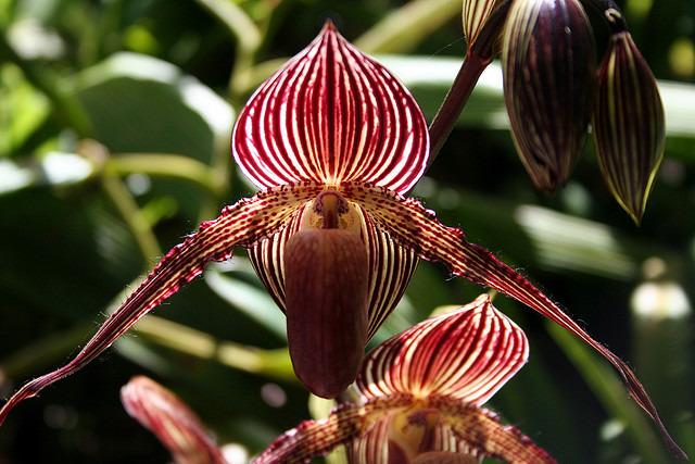 Bukan hanya indah, 10 bunga ini juga memiliki harga yang fantastis