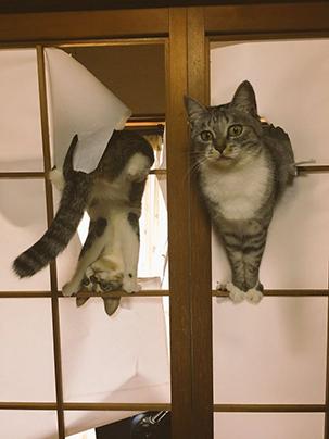 10 Potret tunjukkan tingkah konyol kucing, bikin senyum-senyum sendiri
