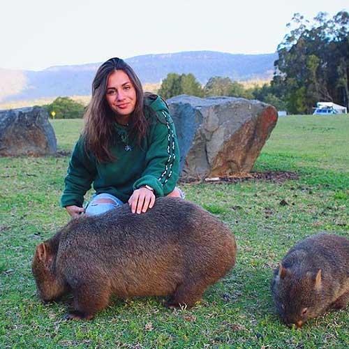 4 Fakta tentang Wombat, binatang lucu asal Australia