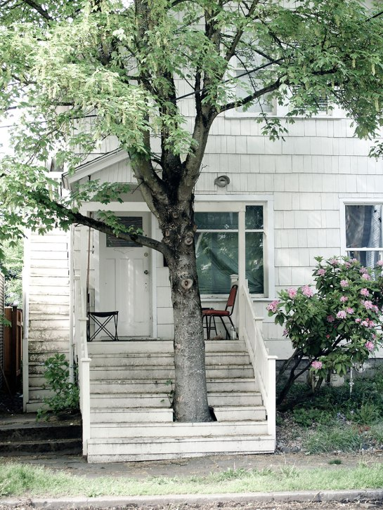 15 Pohon ini dibiarkan tumbuh alami di tengah bangunan, unik banget