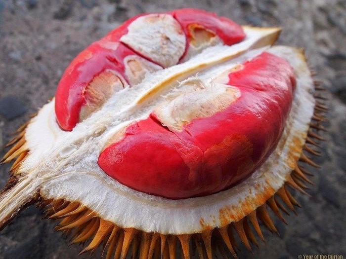4 Varian durian dari Kalimantan ini wajib dicoba