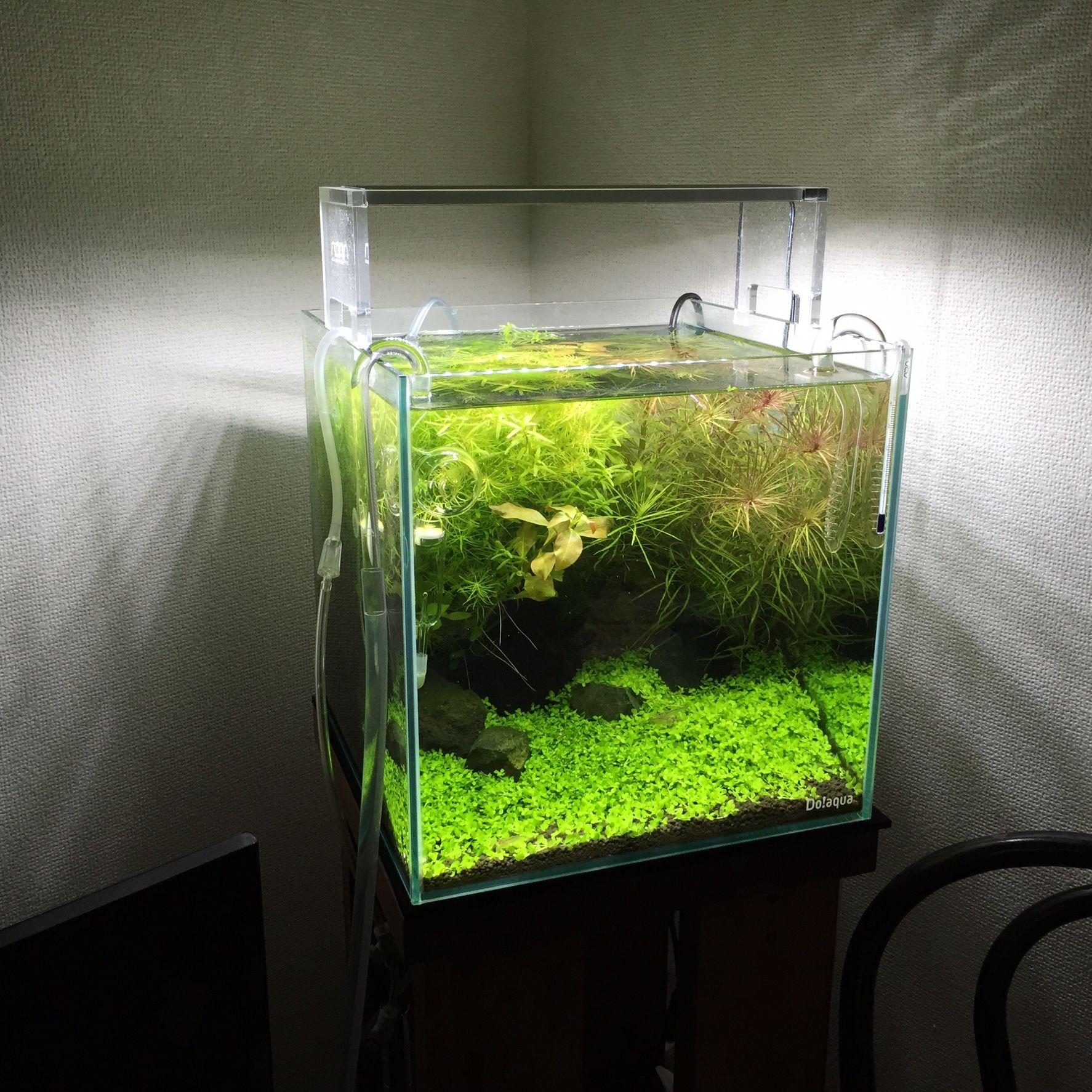 3 Ide dekorasi mini dari aquarium ini bisa mempercantik ruangan